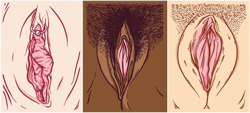 tipos de vaginas meredith white