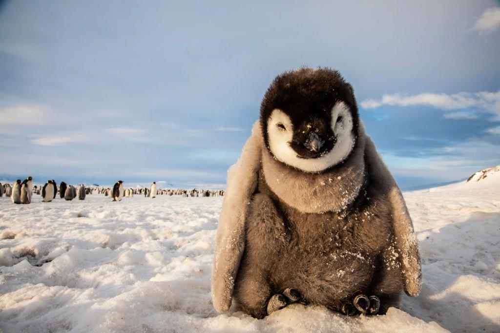 viaje a la antartida pinguinito