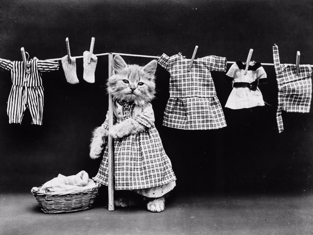 Harry Free gato ropa