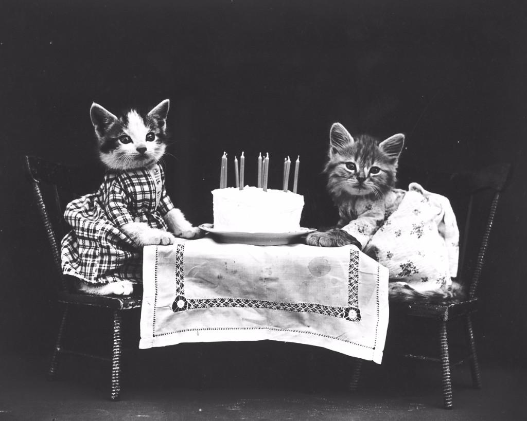 Harry Free gatos pastel