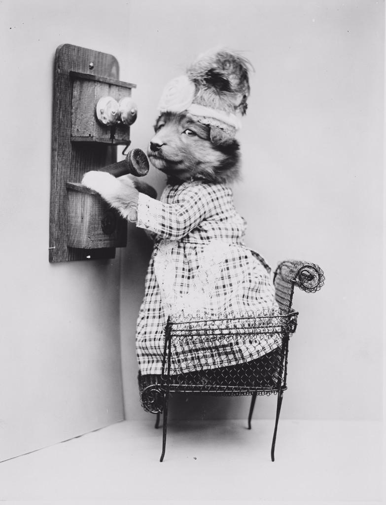 Harry Free perrito telefono