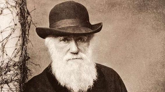 darwinismo social 11