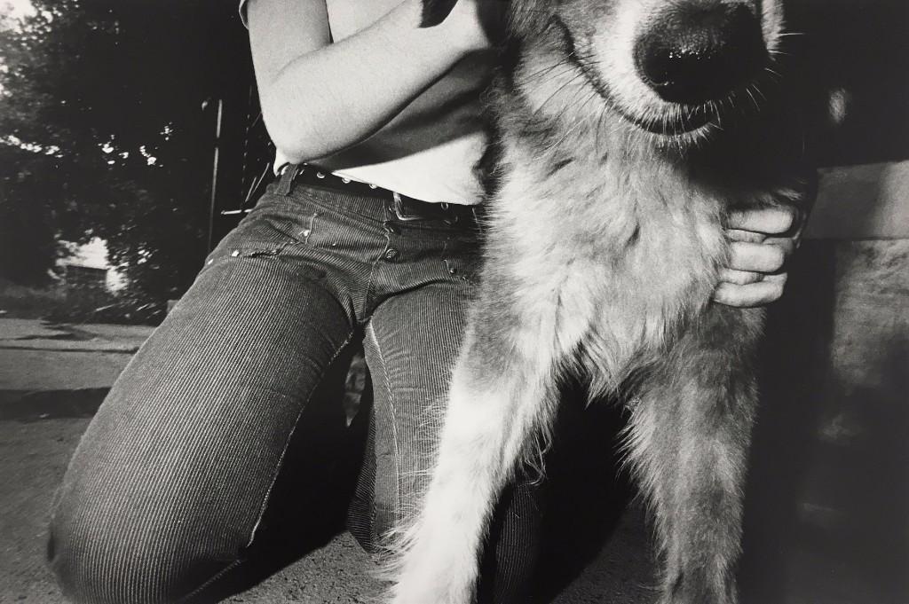 mark cohen perro