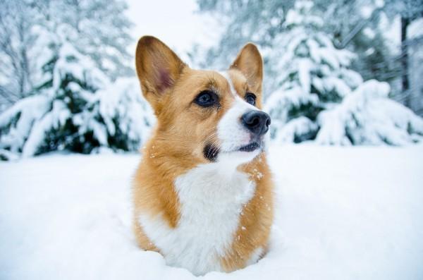 musica a traves de imagenes perro frio