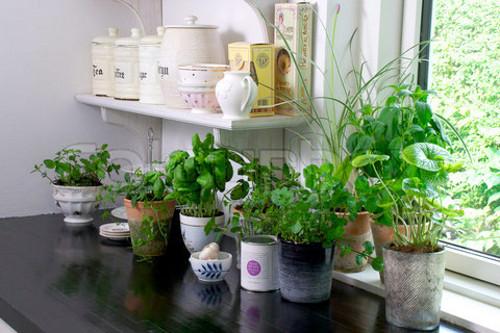 6 ideas para darle un toque hipster a tu cocina dise o for Plantas para interiores feng shui
