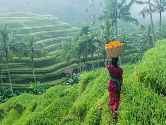 viajes a asia ubud