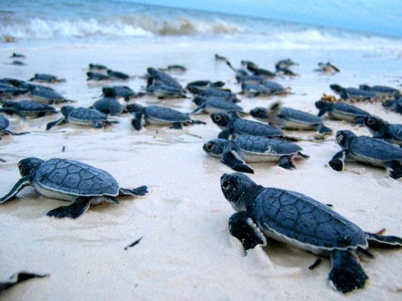 playas mas baratas 6