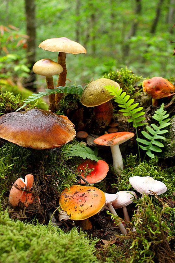 Cosas que debes saber sobre los hongos en esta temporada de ...