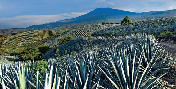 tequila jalisco pueblos magicos mexico