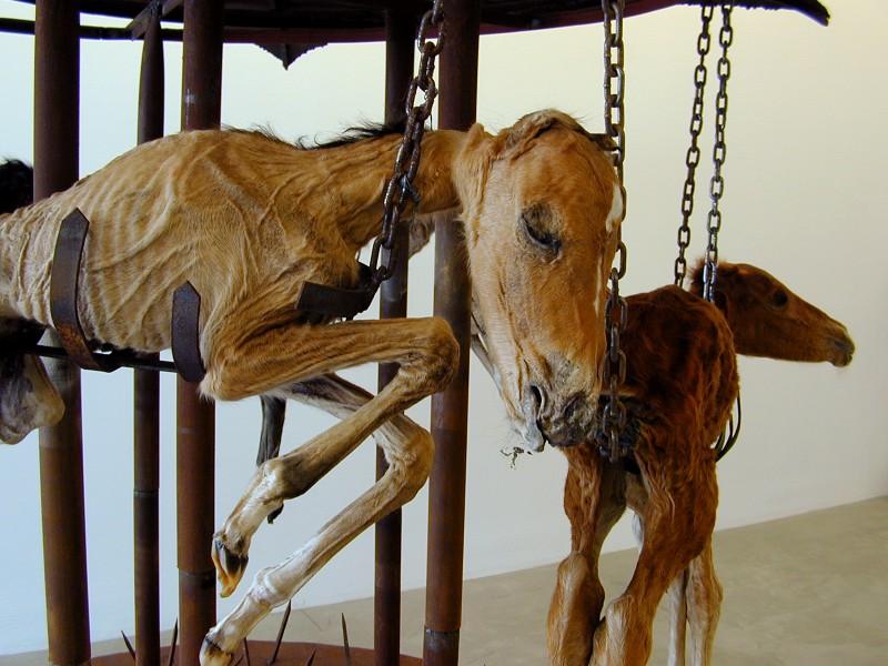 teresa margolles caballos