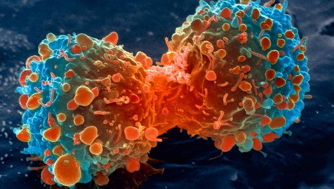 encontrar la cura contra el cancer