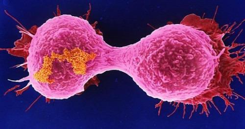 combatir el cancer