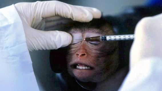 animales utilizados para experimientos