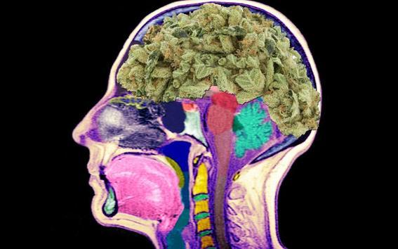 efectos de la marihuana 1