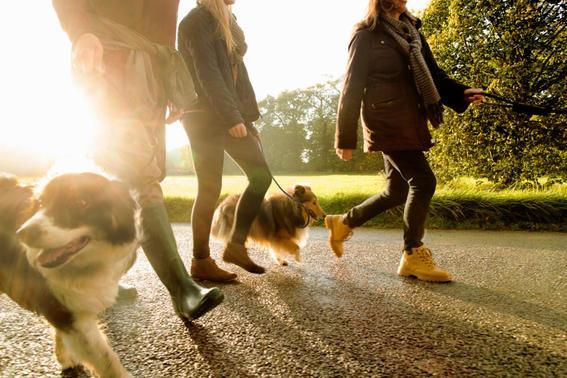 pasear-al-perro