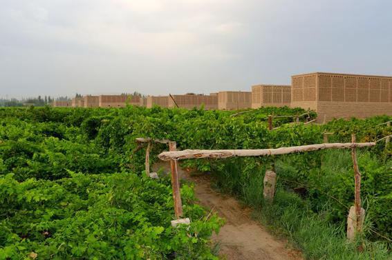 ruta de la seda viñedos turfan
