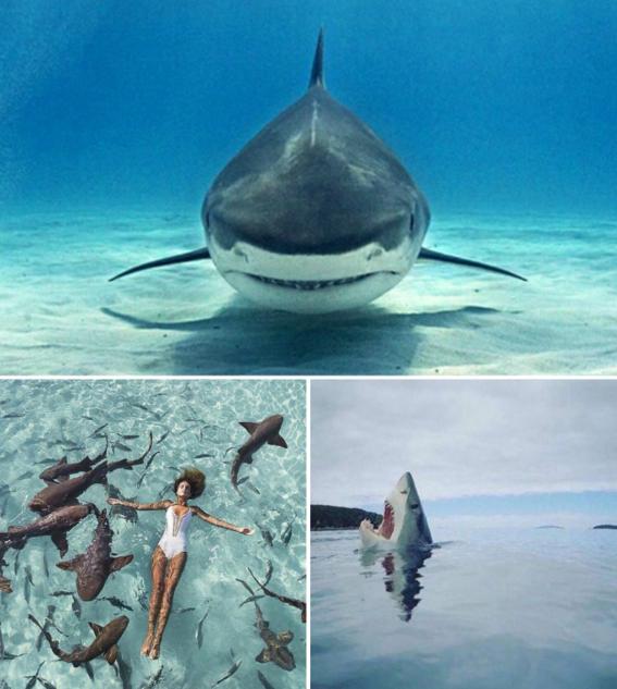 cosas salvajes tiburones