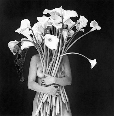 flor garduno alcatraces