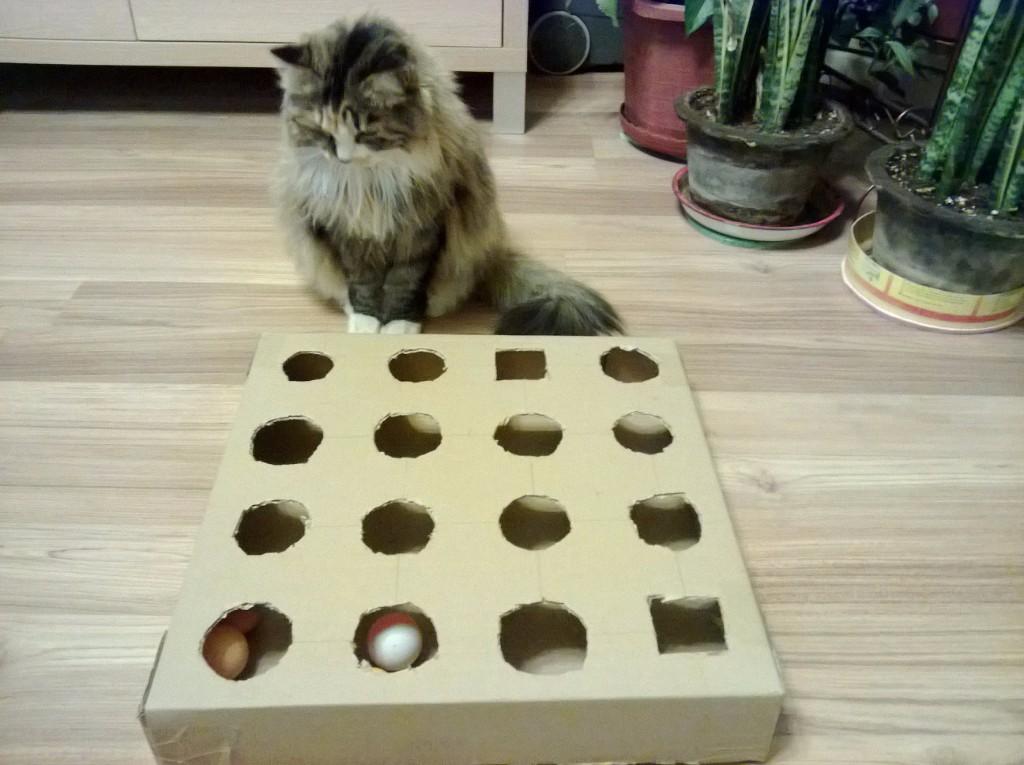 consentir a tu gato DIY formas de consentir a tu gato