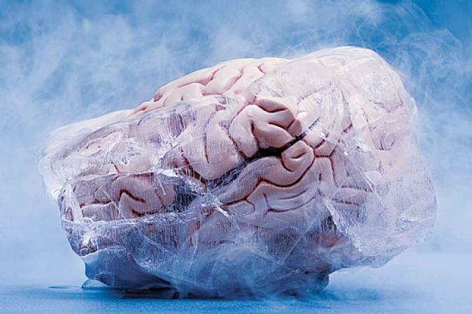 criogenizacion cerebro