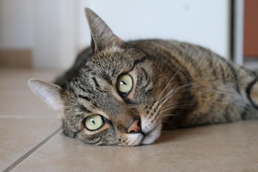 consentir a tu gato DIY
