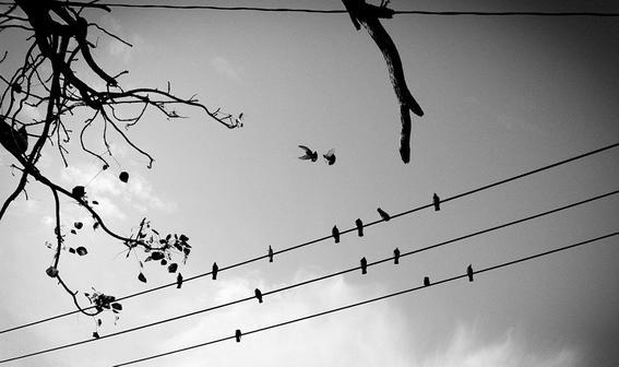 fotografas cables