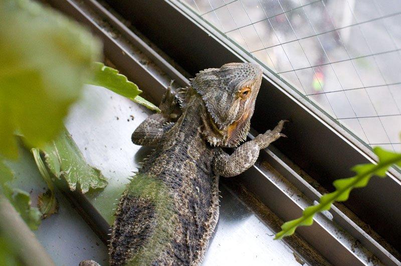lugares en japon cafe reptil