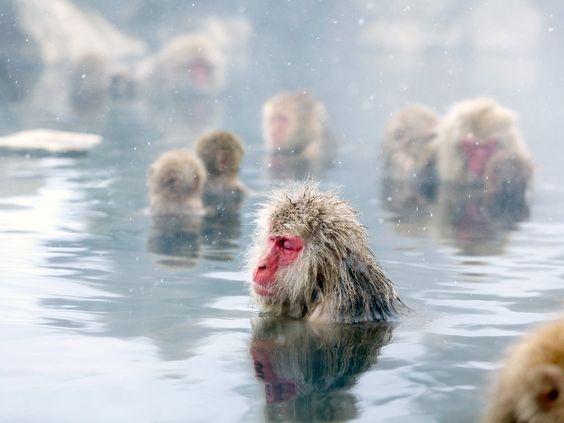 lugares en japon mono