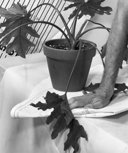 michele abeles photograph plant