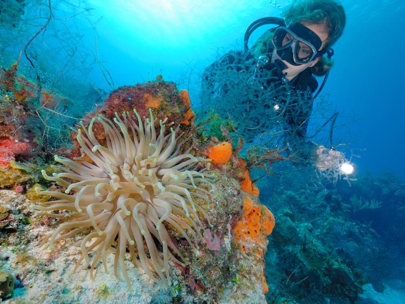 Restore coral