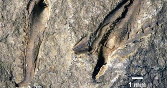 microbios prehistoricos