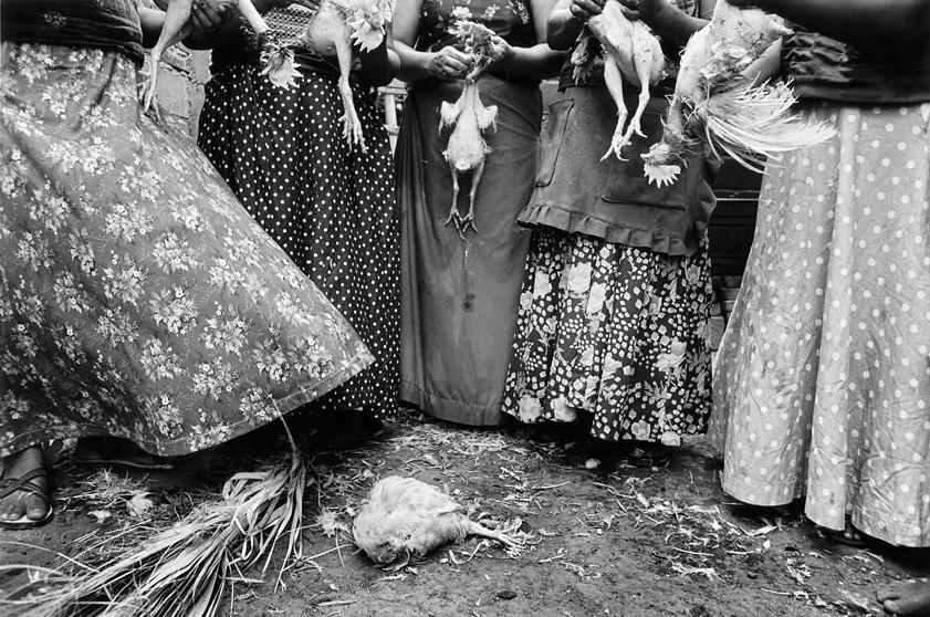 cuentos cortos de juan rulfo pollos