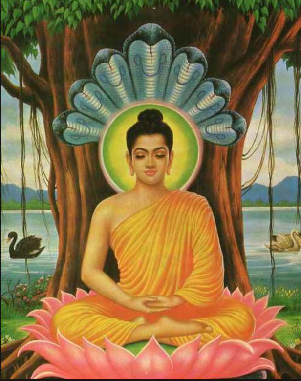 meditarsidhartha