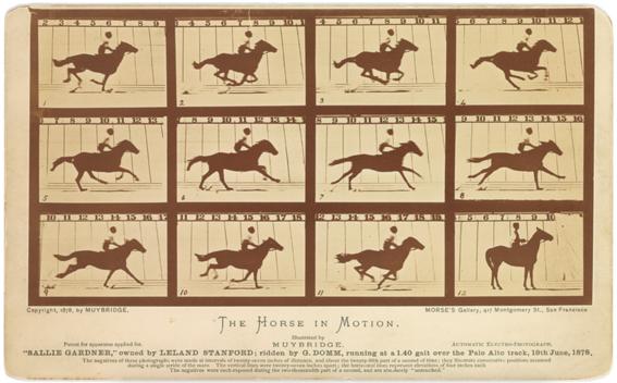 mejores fotografias de la historia caballo