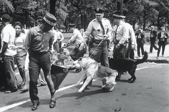 mejores fotografias de la historia perro