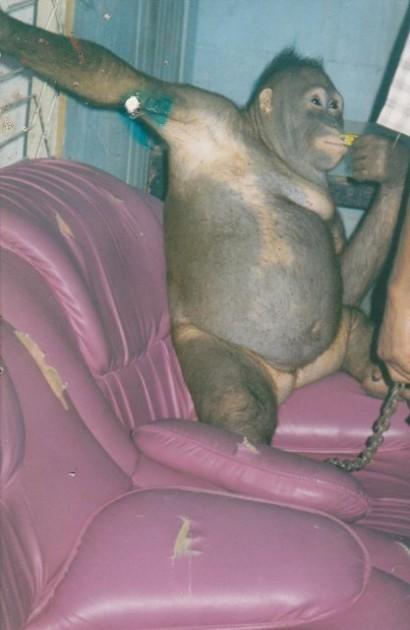 Indonesien Affen Prostitution