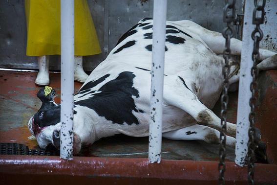 industria lechera en mexico