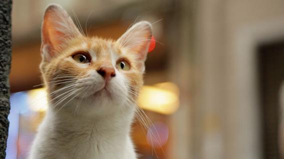 El documental que te muestra la profunda y compleja relación entre los gatos y el ser humano