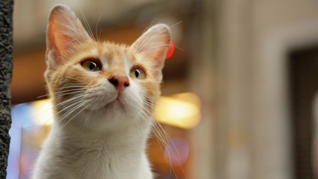 documental kedi