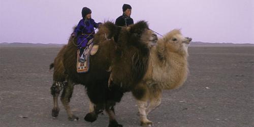 camello documentales internacionales