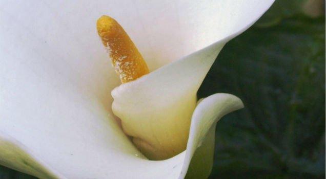 clitoris myths penis