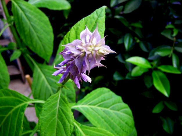 plantas sagradas en México