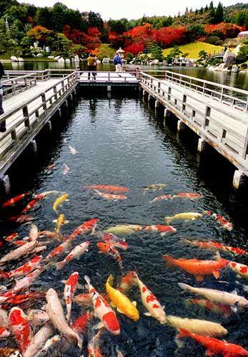 presupuesto para viajar a japon peces
