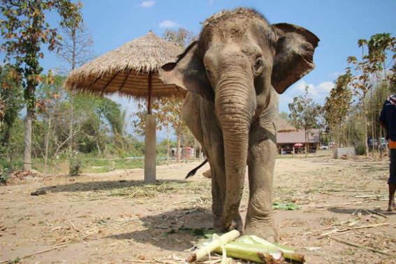 Elefantes tailandia   elefante