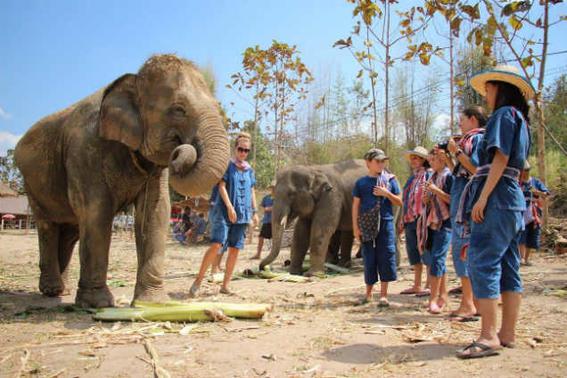 Elefantes tailandia   gente