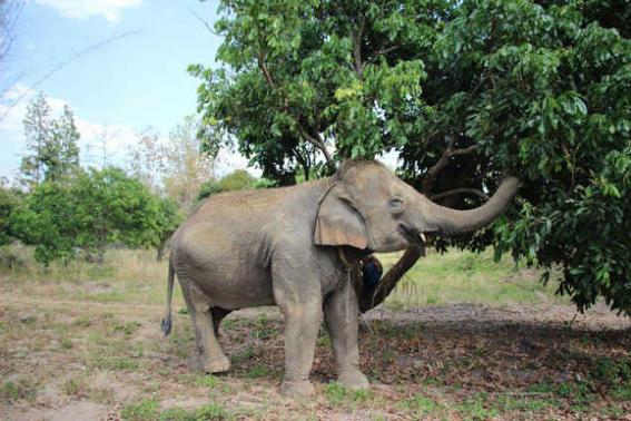 Elefantes tailandia   juego