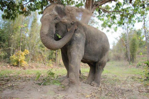 Elefantes tailandia   jugar