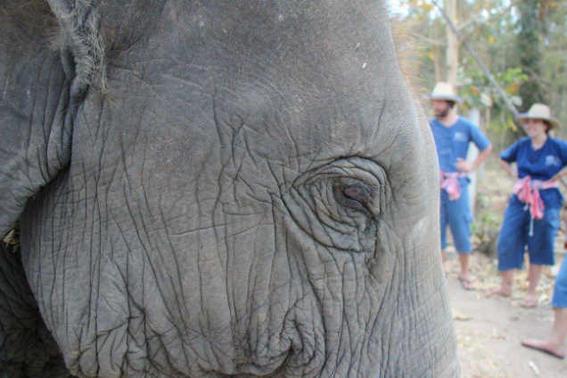 Elefantes tailandia ojo