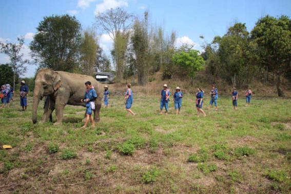 Elefantes tailandia   todos