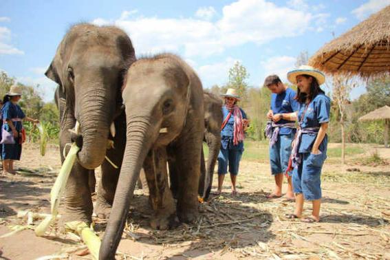 Elefantes tailandia2